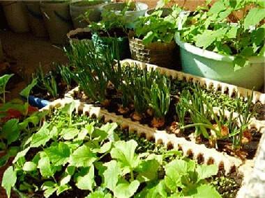 как сделать огород на балконе
