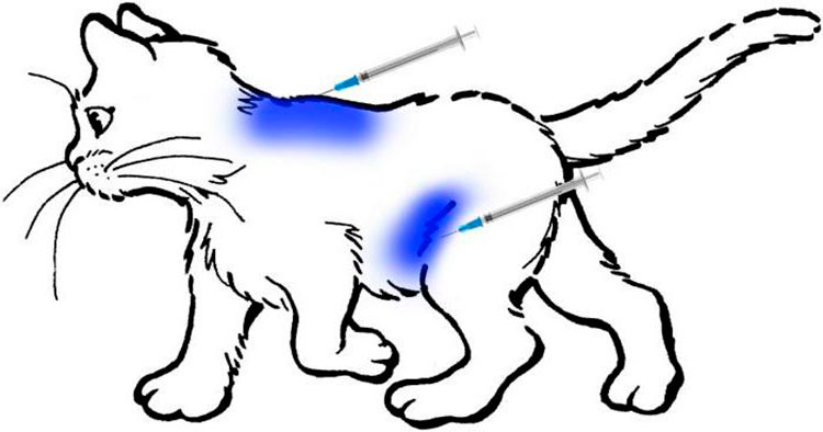 Как правильно сделать укол кошке внутримышечно