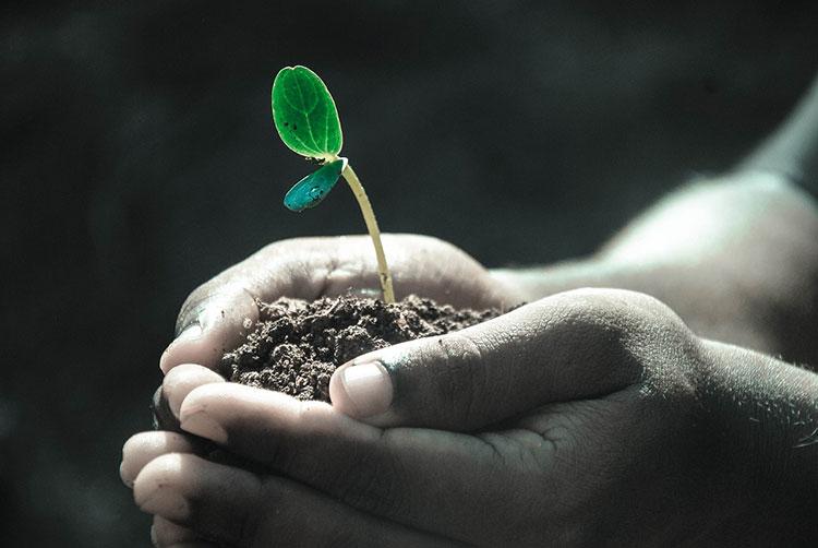 Как посадить и вырастить огурцы Маменькин любимчик