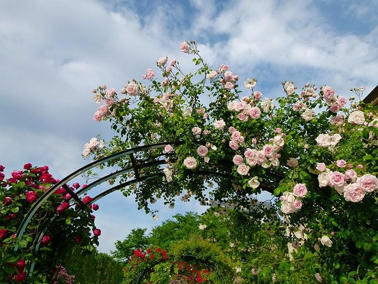 Шпалеры для роз своими руками