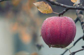 Из яблок рецепты
